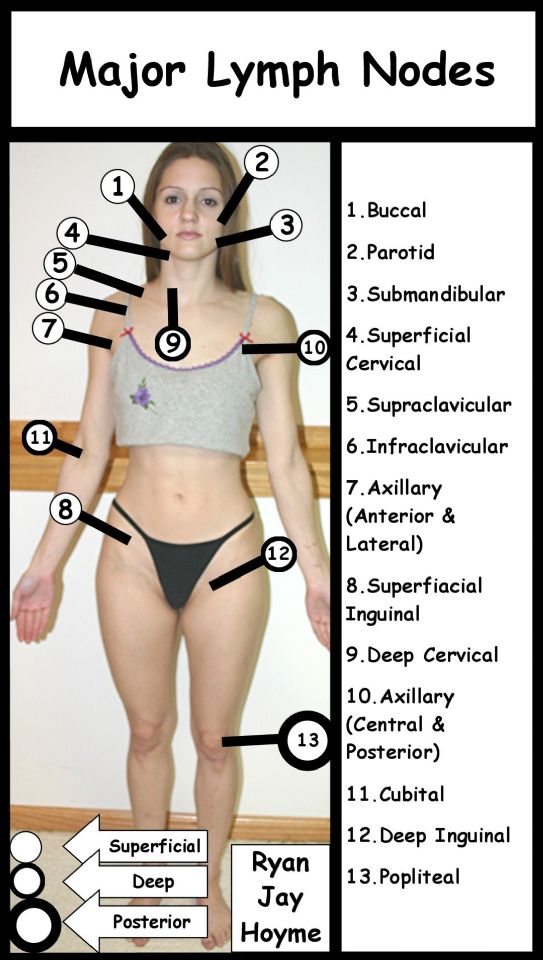Major Lymph Nodes ... (Click to enlarge)