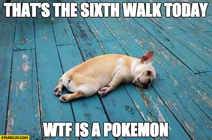 http://curezone.com/upload/_I_J_Forums/Just_for_fun/thats_the_sixth_walk_today_wtf_is_a_pokemon_tired_dog.jpg