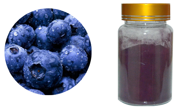 bilberry extract 600