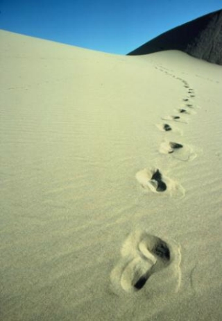 http://curezone.com/upload/_M_Forums/Master_Cleanse/footprints.jpg