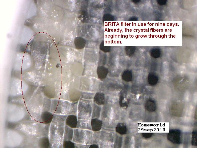 https://www.curezone.org/upload/_M_Forums/Morgellons/FHW/SORT_test/9day_growth29sep10.jpg
