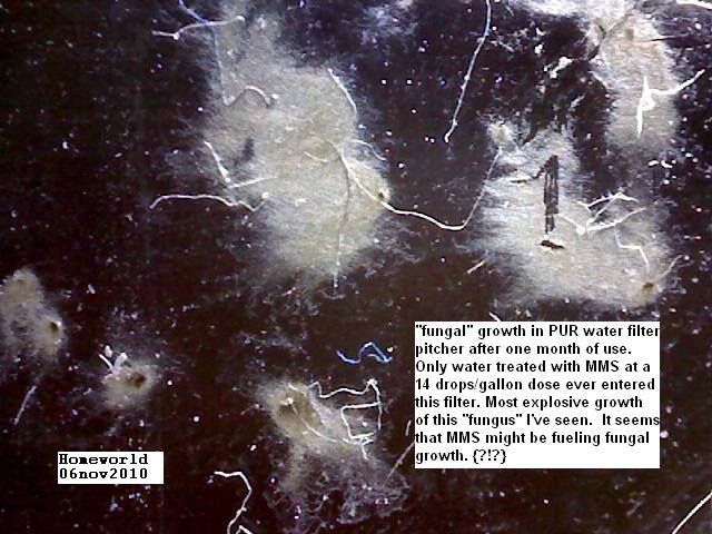 //www.curezone.org/upload/_M_Forums/Morgellons/FHW/SORT_test/purfiltergrowth_6nov10.jpg