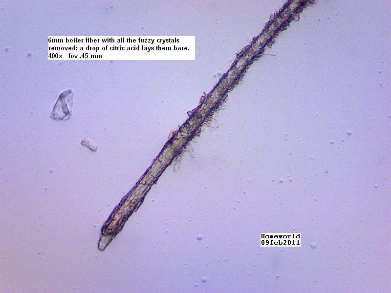 //www.curezone.org/upload/_M_Forums/Morgellons/FHW/SORT_test/shavedfiber_9feb11.jpg