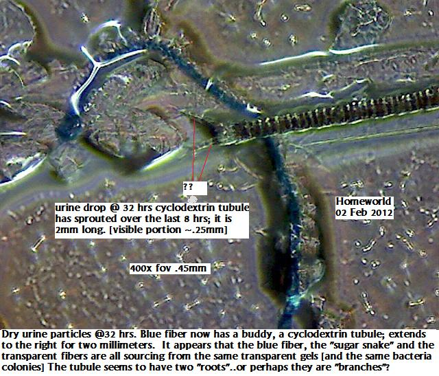 http://curezone.com/upload/_M_Forums/Morgellons/FHW/Urine/macrocycle2feb12.jpg