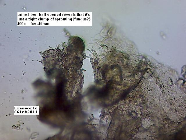 https://www.curezone.org/upload/_M_Forums/Morgellons/FHW/Urine/opened_ball_6feb11.jpg