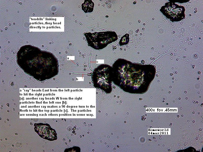 https://www.curezone.org/upload/_M_Forums/Morgellons/FHW/Urine/urine_particl/Copy_of_5.jpg