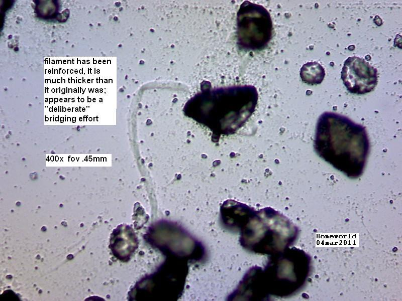 https://www.curezone.org/upload/_M_Forums/Morgellons/FHW/Urine/urine_particl/Copy_of_7.jpg