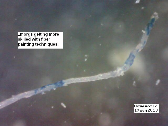https://www.curezone.org/upload/_M_Forums/Morgellons/FHW/fibers/bluewhitefiber17aug10.jpg