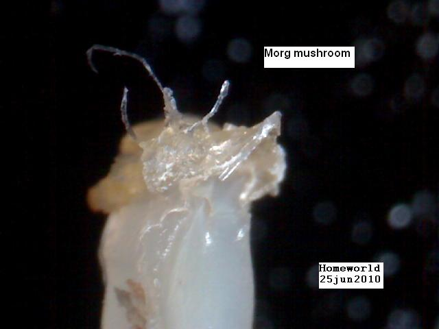 //www.curezone.org/upload/_M_Forums/Morgellons/FHW/shroom_25jun10.jpg