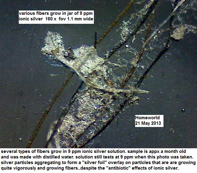 http://curezone.com/upload/_M_Forums/Morgellons/FHW/silver/Agfiber21may13.jpg