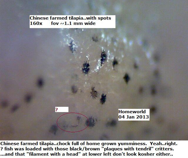 http://curezone.com/upload/_M_Forums/Morgellons/FHW/strange/tilapia4jan13.jpg