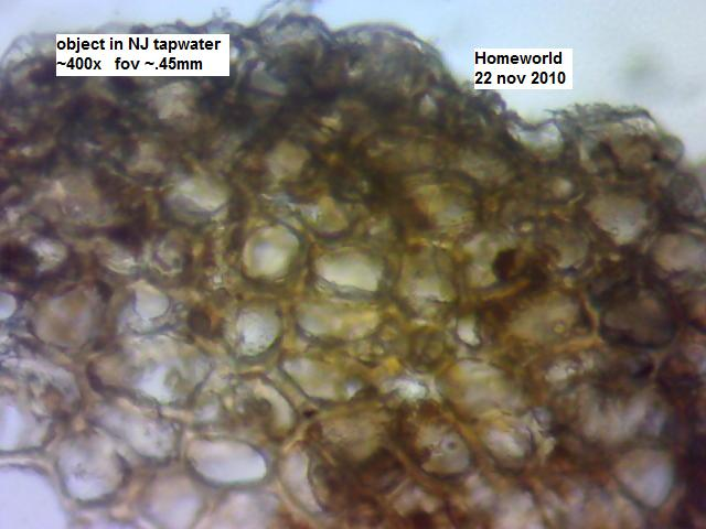 https://www.curezone.org/upload/_M_Forums/Morgellons/FHW/tapwater/cellular22nov10.jpg