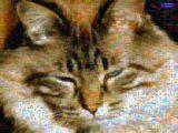 http://curezone.com/upload/_M_Forums/kitty_sleeping.jpg