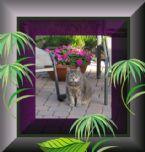 Dimitroula in Her Garden1