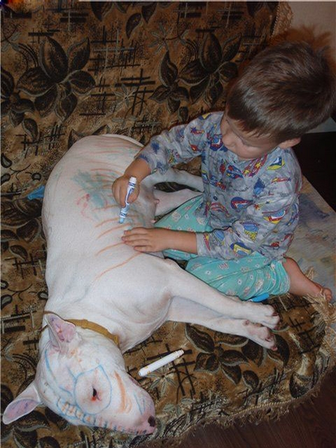 http://curezone.com/upload/_O_P_Forums/Pets/painted_dog.jpg