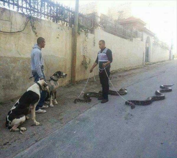 http://curezone.com/upload/_O_P_Forums/Pets/pet_walking.jpg