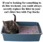 kitty litter pop rocks1