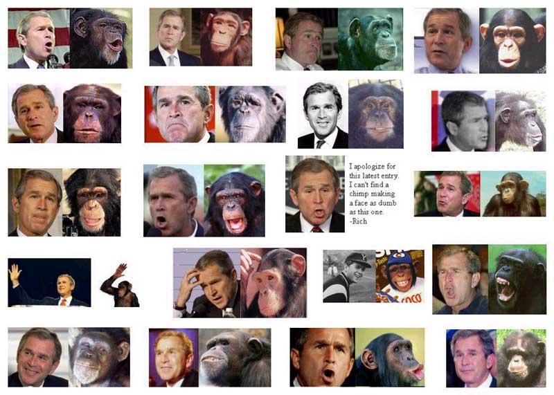 bush chimp 1