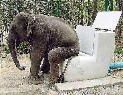 Funny animals: Elephant sitting on a toilet