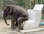 Funny animals: Elephant sitting on a toilet ... (Click to enlarge)