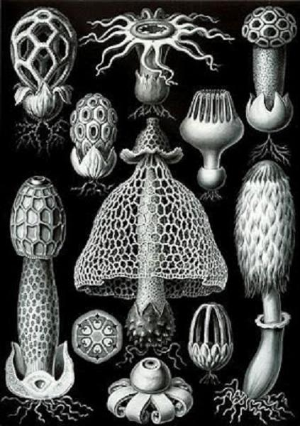 http://curezone.com/upload/_O_P_Forums/carbonchiovegetali_Haeckel_Basimycetes.jpg