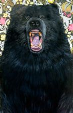 Grizzly black bear growling