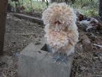 muppet bantam