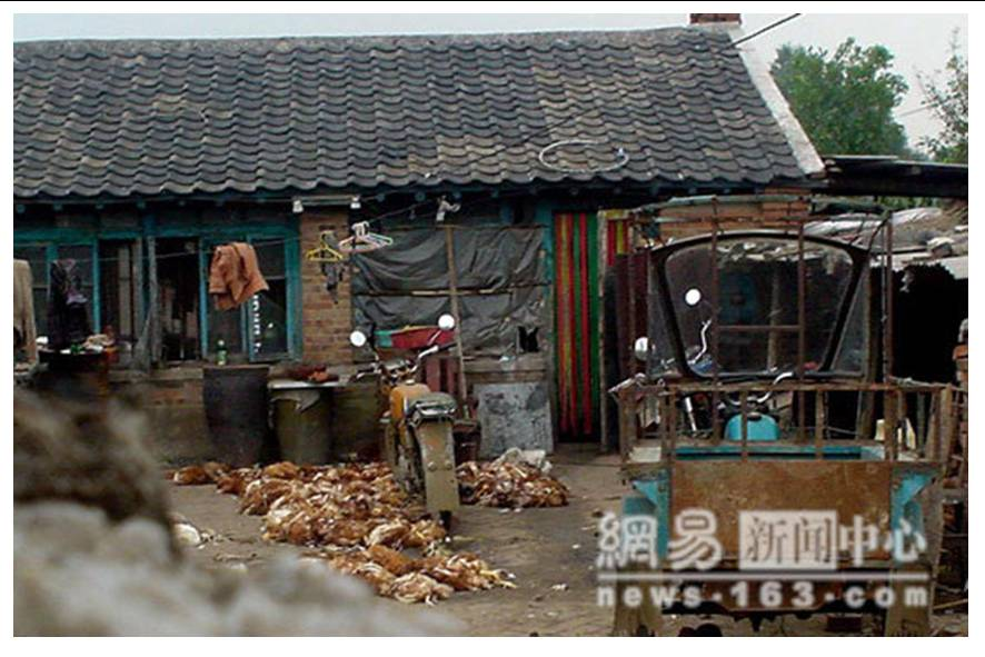 http://curezone.com/upload/blogs/animal_cruilty/Chicken_in_China5.jpg