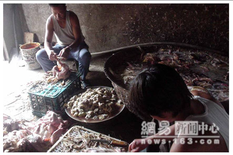 http://curezone.com/upload/blogs/animal_cruilty/Chicken_in_China8.jpg