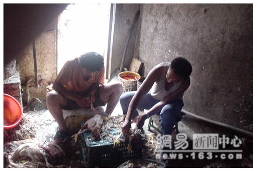 http://curezone.com/upload/blogs/animal_cruilty/Chicken_in_China9.jpg
