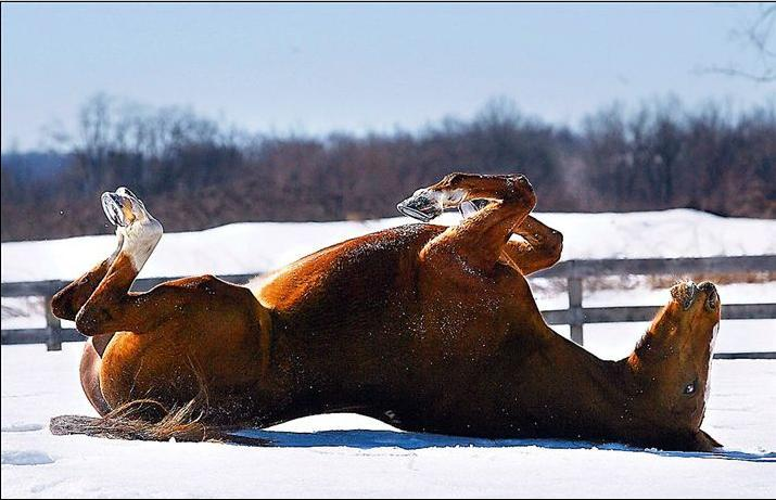 Horse on back ... (Click to enlarge)