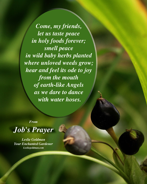 Job s Prayer Water Hose w ... (Click to enlarge)