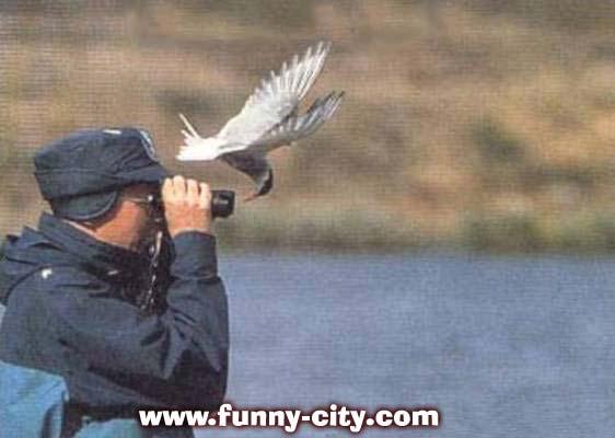 Fun Images