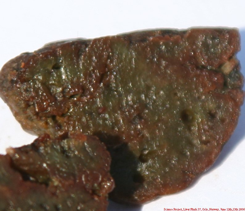 Science Project Liver Flush 37 053a