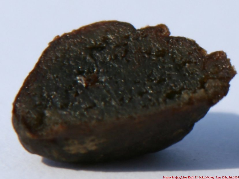 Science Project Liver Flush 37 055
