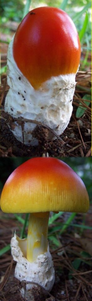 Before After Mushroom ... (Click to enlarge)