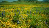 http://curezone.com/upload/members/new01/CA_CarrizoPlain.jpg
