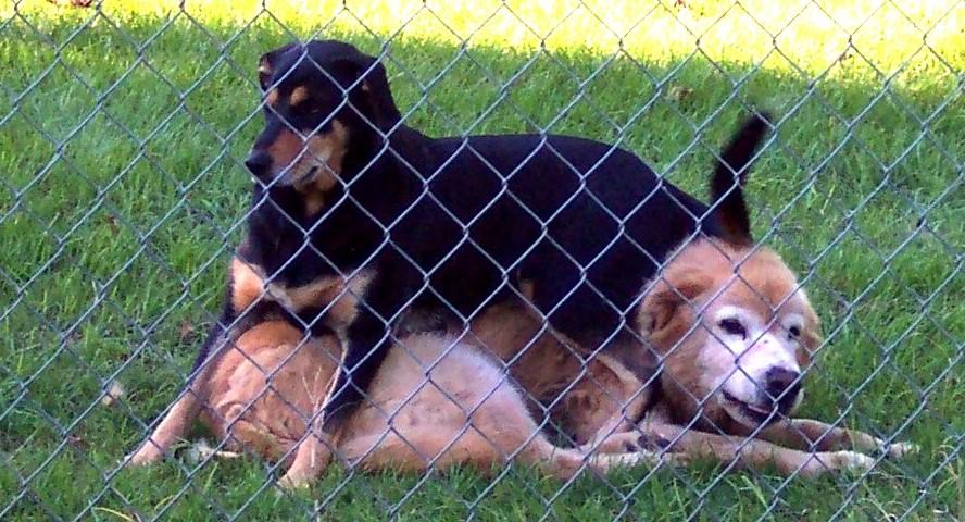 Dog Sofa ... (Click to enlarge)