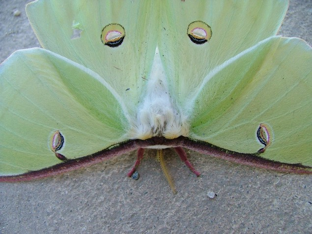 Green Butterfly 0122 ... (Click to enlarge)