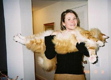Big Cat (huge cat) ... (Click to enlarge)