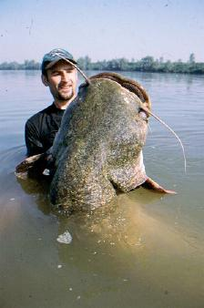 Largest Cat Fish I cot ... (Click to enlarge)