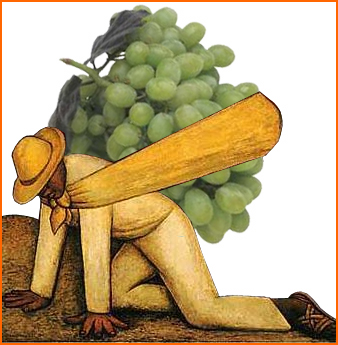 great grapes uploaded to CureZone by #44765