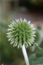 http://curezone.com/upload/photos/summer_flowers/tn-IMG_4919.jpg